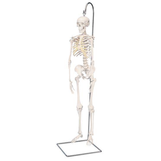 Mini Skeleton - Shorty - hangend A18/1